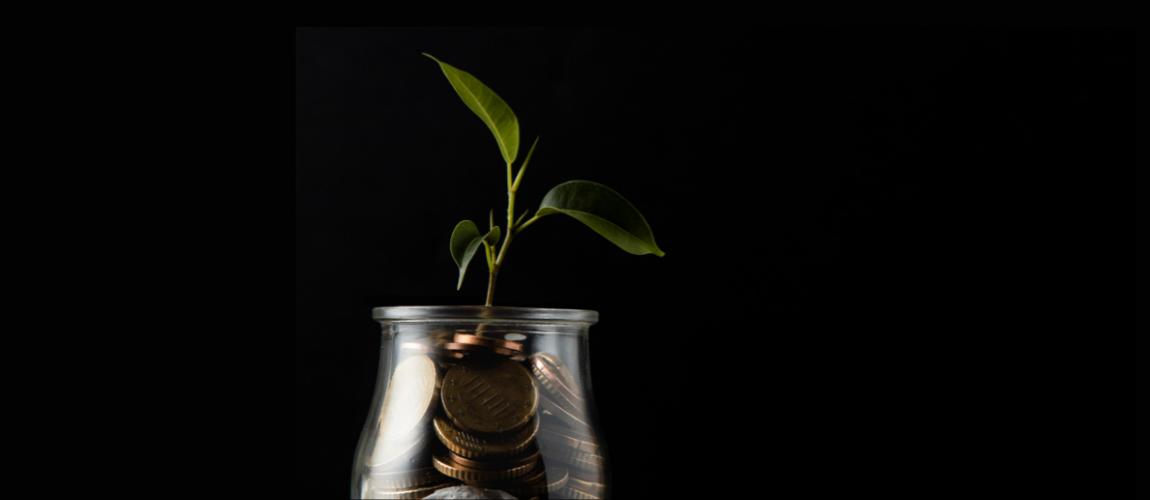 Black-Background-Green-Plant-In-Jar-Of-Money
